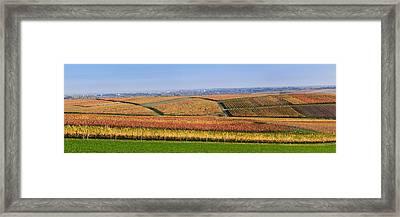 Vineyards In Autumn Near Gleisweiler Framed Print