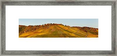 Vineyards In Autumn, Uhlbach Framed Print by Panoramic Images