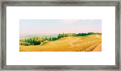 Vineyards In Spring, Napa Valley Framed Print by Panoramic Images