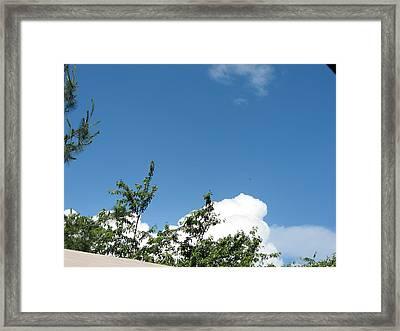 Vineyards In Va - 12122 Framed Print