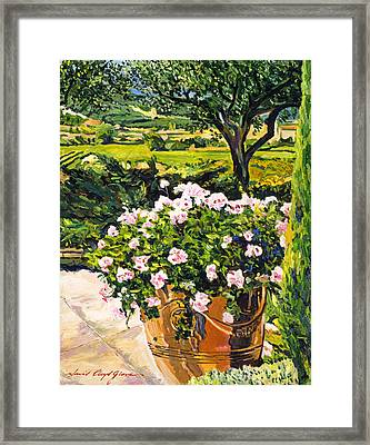 Vineyards Of Provence Framed Print by David Lloyd Glover