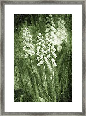 Vintage Flower Background Framed Print by Jaroslaw Grudzinski