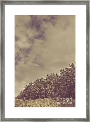 Vintage Pine Forest Landscape In Strahan Tasmania Framed Print