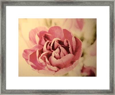 Vintage Pink Framed Print