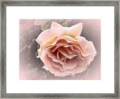 Vintage Rose No. 3 Framed Print by Richard Cummings