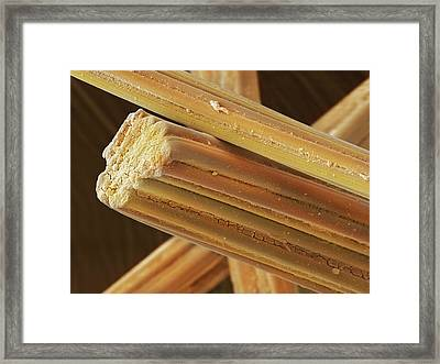 Viscose Fibres (sem) Framed Print by Power And Syred