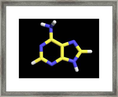 Vitamin B4 Framed Print by Dr Tim Evans/science Photo Library