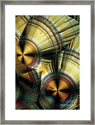 Vitamin C Crystals Framed Print by Claude Nuridsany and Marie Perennou