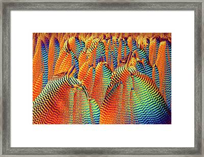 Vitamin C Framed Print
