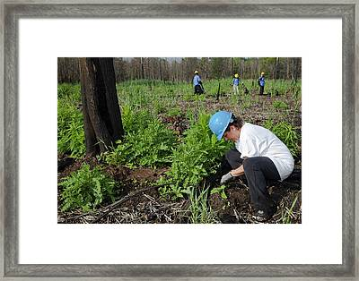 Volunteers Removing Invasive Plants Framed Print by Jim West