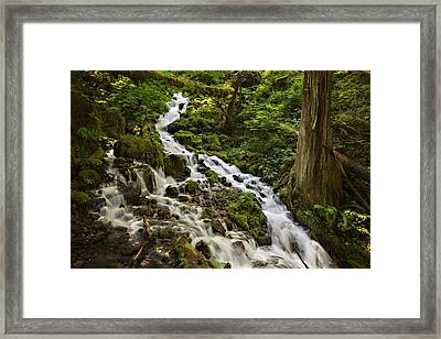 Wahkeena Creek Framed Print by Mary Jo Allen