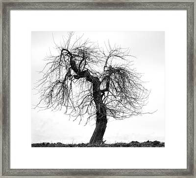 Framed Print featuring the photograph Waiting For Spring by Michael Dohnalek
