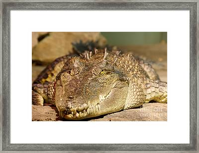 Waiting Framed Print by Traci Law