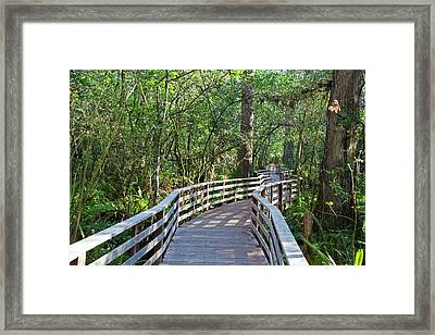 Walkway In A Nature Reserve Framed Print by Jim West