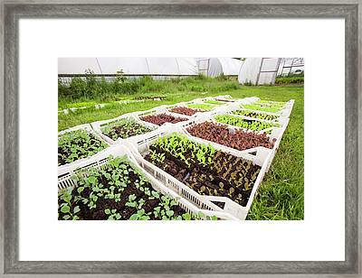 Washingpool Farm In Bridport Framed Print by Ashley Cooper