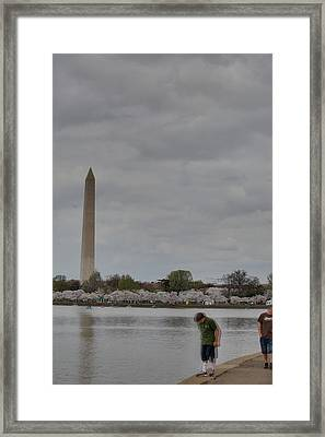 Washington Monument - Cherry Blossoms - Washington Dc - 011313 Framed Print by DC Photographer