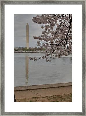 Washington Monument - Cherry Blossoms - Washington Dc - 011317 Framed Print by DC Photographer