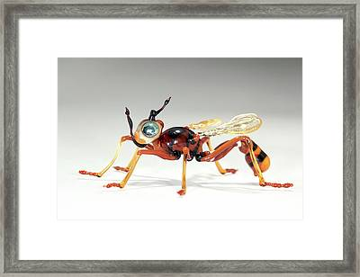Wasp Framed Print by Tomasz Litwin