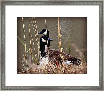 Watchful Framed Print by Mary Zeman