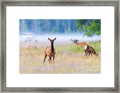 Watchful Framed Print by Mike Dawson
