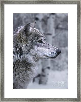Watching And Waiting Framed Print by Sandra Bronstein