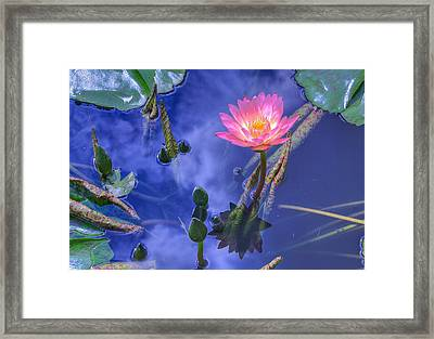 Flower 7 Framed Print