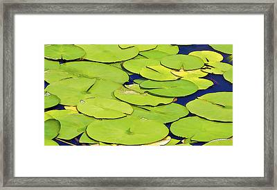 Water Lilly Framed Print by David Letts