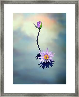 Water Lily Framed Print by Jessica Jenney