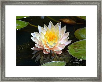 Framed Print featuring the photograph Water Lily by Lisa L Silva