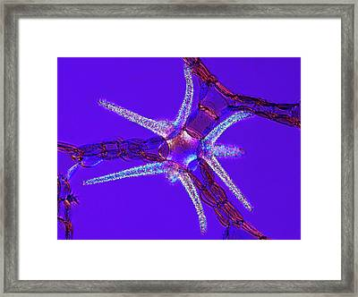 Water Lily Stem Framed Print