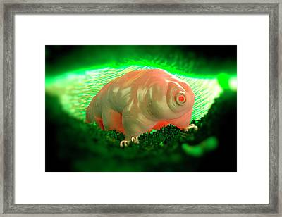 Waterbear Framed Print