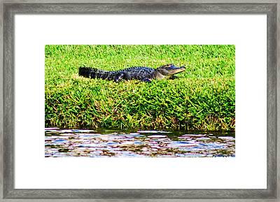 Waters Edge Framed Print by Marty Gayler