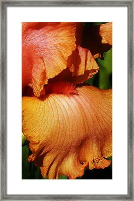 Waves Of Petals Framed Print by Bruce Bley