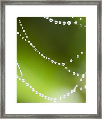 Web World Framed Print