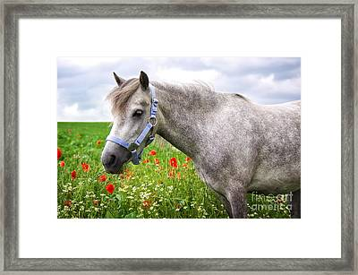 Welsh Pony Framed Print