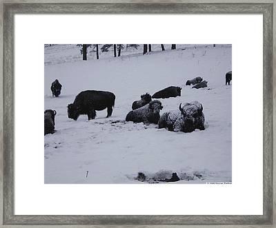 We're Not Cold Framed Print by Steven Parker