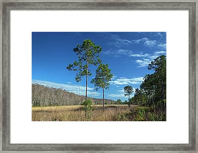 Wet Prairie Nature Reserve Framed Print by Jim West