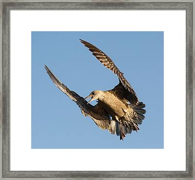 What Framed Print by Paulette Thomas
