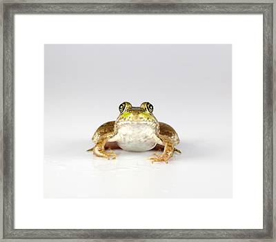 Framed Print featuring the photograph What You Looking At? by John Crothers