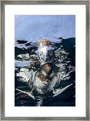What's Down Here Framed Print