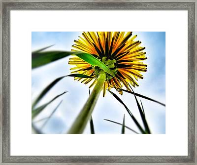 What's Up? Framed Print by Marianna Mills