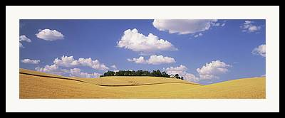 Simple Beauty In Colors Framed Prints