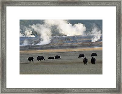Where The Buffalo Roam Framed Print by Bruce Gourley