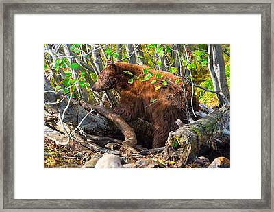 Where The Wild Things Are Framed Print by Scott Warner