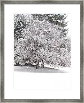 White As Snow Framed Print