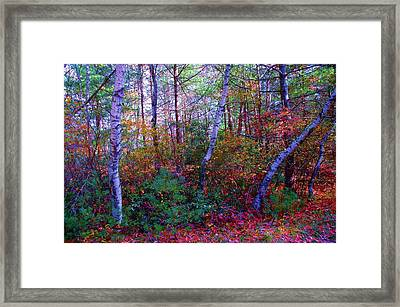 White Birch - Pocono Mountains Framed Print by Susan Carella