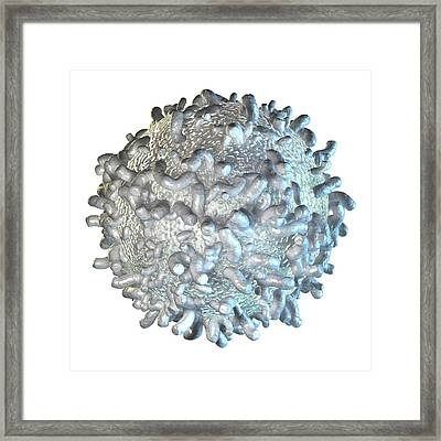 White Blood Cell Framed Print