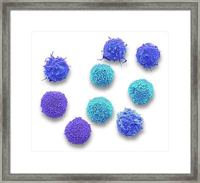 White Blood Cell Framed Print by Steve Gschmeissner