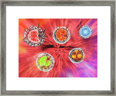 White Blood Cells Framed Print by Alfred Pasieka