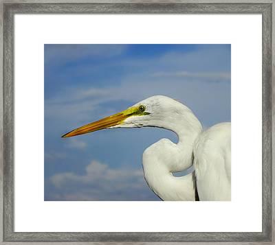 White Egret Framed Print by Carolyn Bistline